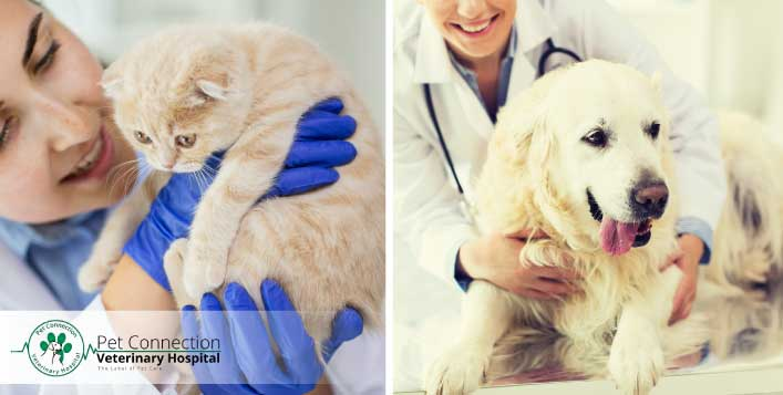 Annual Vaccination & Deworming for Cat or Dog