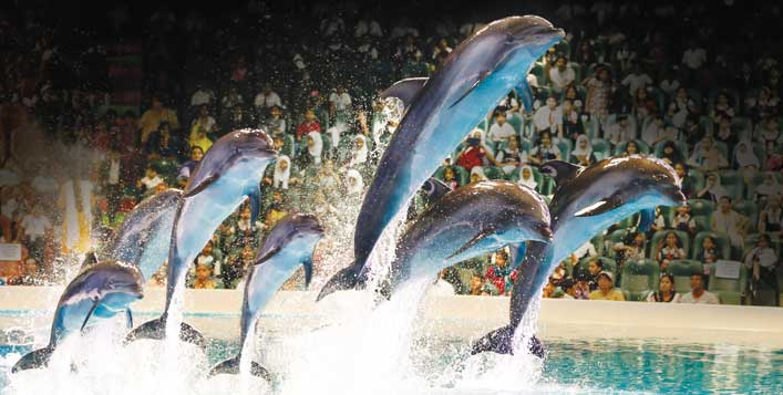Illusion, Dolphin and Seal Show