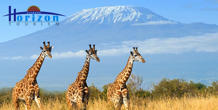 3 Night Kenya Safari, Diamond Horizon Tourism